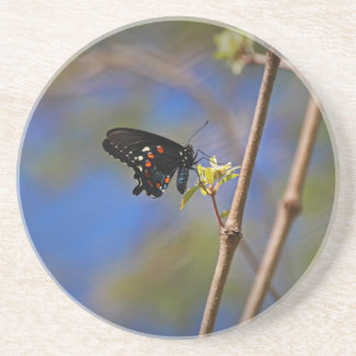 Spicebush Swallowtail I Beverage Coasters