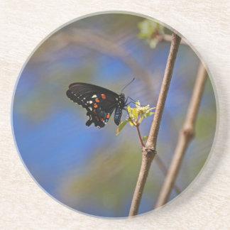 Spicebush Swallowtail I Coaster