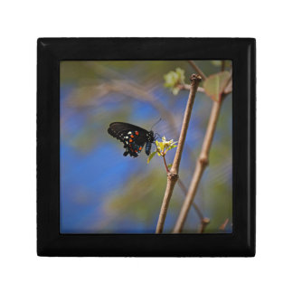 Spicebush Swallowtail I Gift Box