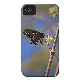 Spicebush Swallowtail I iPhone 4 Case-Mate Cases