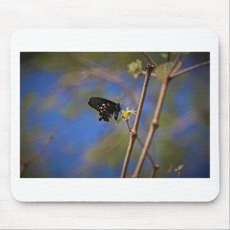Spicebush Swallowtail I Mouse Pad
