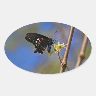 Spicebush Swallowtail I Oval Sticker