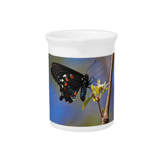 Spicebush Swallowtail I Pitcher