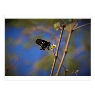Spicebush Swallowtail I Postcard