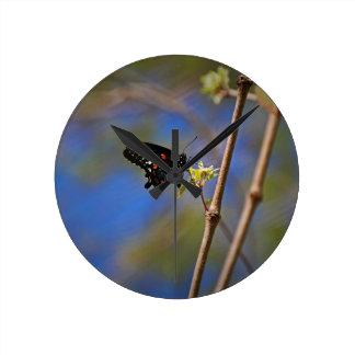 Spicebush Swallowtail I Round Clock