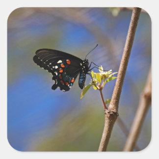 Spicebush Swallowtail I Square Sticker