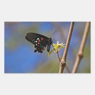 Spicebush Swallowtail I Sticker