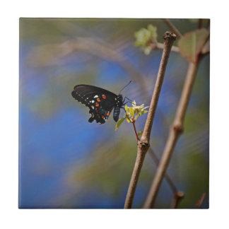 Spicebush Swallowtail I Tile
