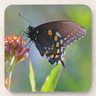 Spicebush Swallowtail II Beverage Coasters