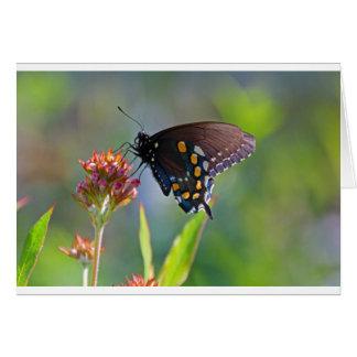 Spicebush Swallowtail II Card