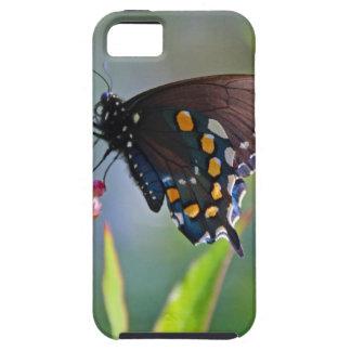 Spicebush Swallowtail II iPhone 5 Case