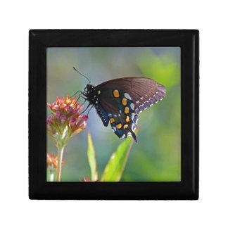 Spicebush Swallowtail II Keepsake Box