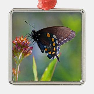 Spicebush Swallowtail II Metal Ornament