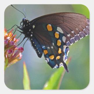 Spicebush Swallowtail II Square Sticker