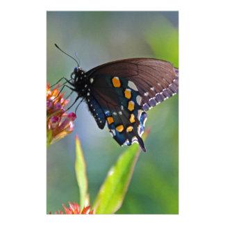 Spicebush Swallowtail II Stationery