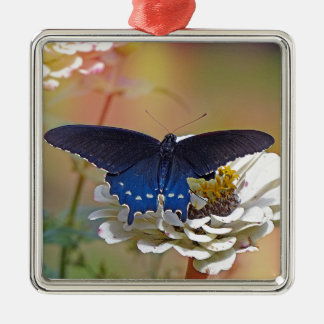 Spicebush Swallowtail Silver-Colored Square Ornament