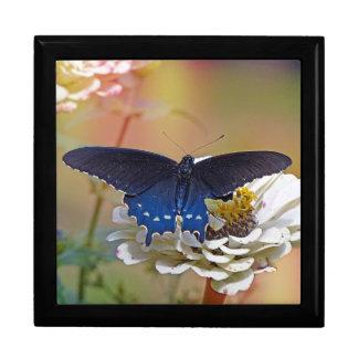 Spicebush Swallowtail Trinket Boxes