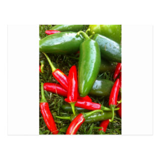 Spicy Peppers Postcard