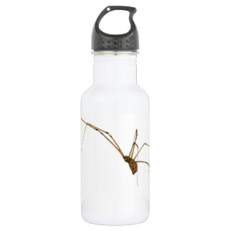 Spider 532 Ml Water Bottle