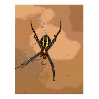 SPIDER BLACK AND YELLOW QUEENSLAND AUSTRALIA POSTCARD