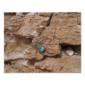 Spider, carrying blue egg sac, sandstone rock-face poster