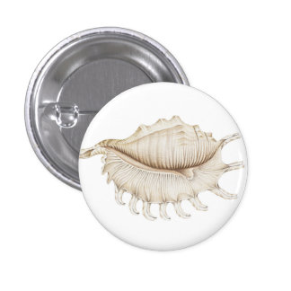 Spider Conch Shell in Coloured Pencil Badge 1 Inch Round Button