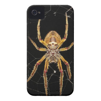 Spider design iPhone 4 case