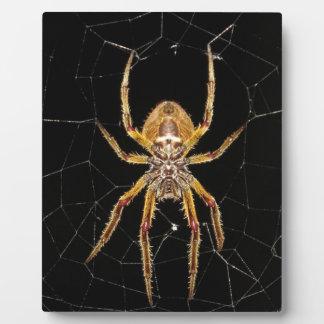 Spider design plaque