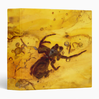 Spider inside baltic amber stone binders