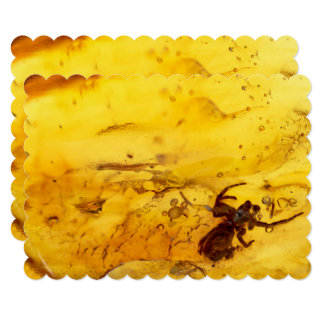 Spider inside baltic amber stone card