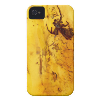 Spider inside baltic amber stone iPhone 4 cover