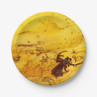 Spider inside baltic amber stone paper plate