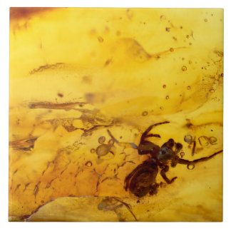 Spider inside baltic amber stone tile