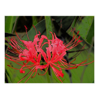 Spider Lily 2 Poster