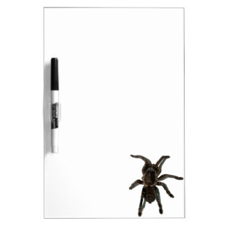 Spider lovers dry erase board