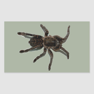Spider lovers sticker