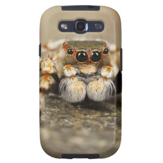 Spider Nature Animals  Wild  insects Samsung Galaxy S3 Cases