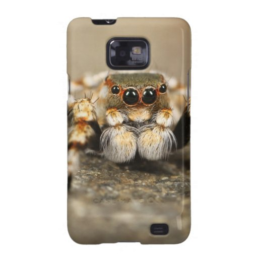 Spider Nature Animals  Wild  insects Samsung Galaxy SII Cover