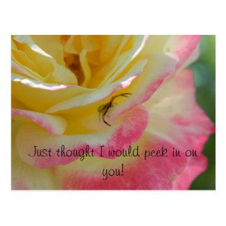 Spider on a Rose Postcard