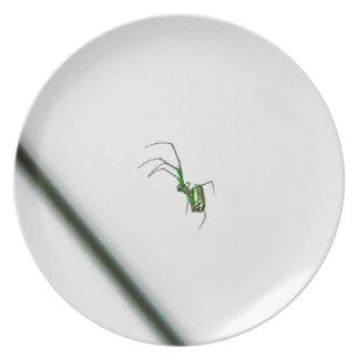 spider plate