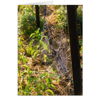 Spider Web and Dew Drops Card (Blank)