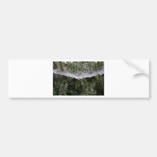 Spider web bumper sticker