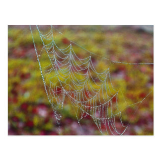 Spider Web of Pearls Postcard