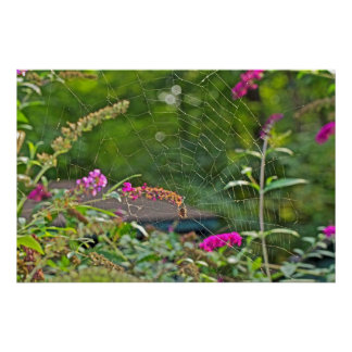 Spider Web On Butterfly Bush Poster