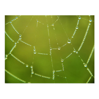 spider web picture postcard