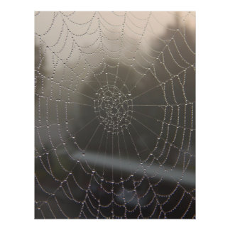 Spider Web With Morning Dew Poster