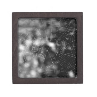 Spider webs make compelling shapes. premium jewelry box