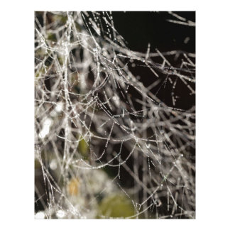 Spider webs with dew drops letterhead