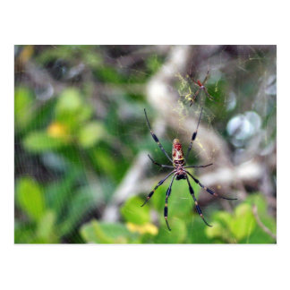 Spiders in Web Postcard