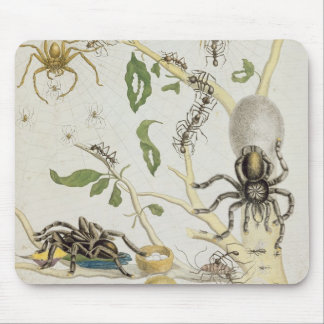 Spiders: Mygole, plate 18 from 'Over de Voorteelin Mouse Pad